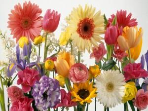 Postal: Varios tipos de flores