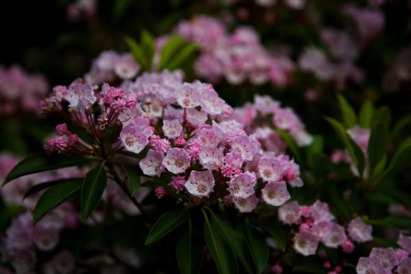 Las pequeñas flores de una planta