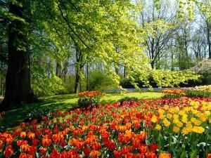 Hermosos tulipanes junto al árbol
