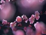 Florecillas rosas en las ramas