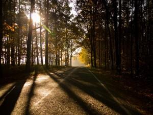 Sombras y luces en la carretera