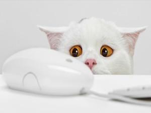 Postal: ¿Miedo al ratón?