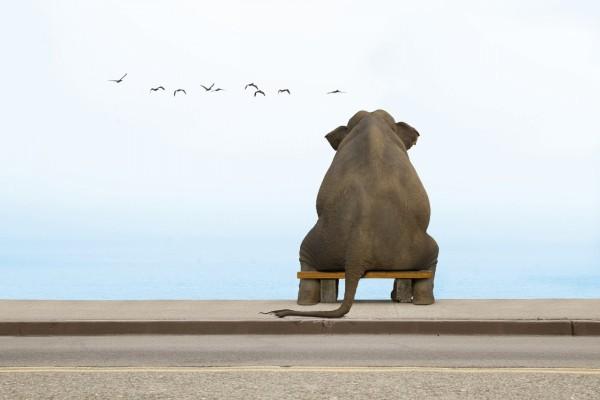 Elefante contemplando el mar