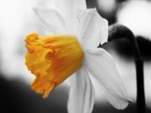 Flor en dos colores
