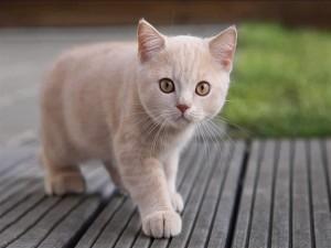 Postal: Gatito curioso