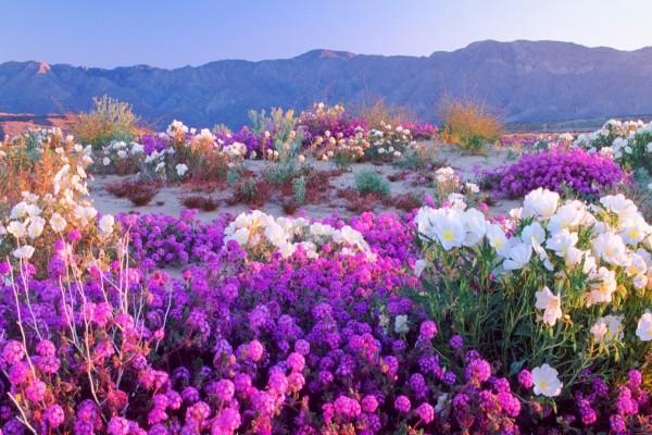 Gran variedad de flores junto a las montañas