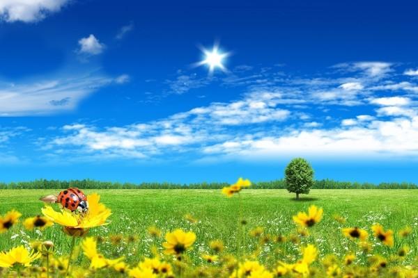 Mariquita sobre una flor amarilla