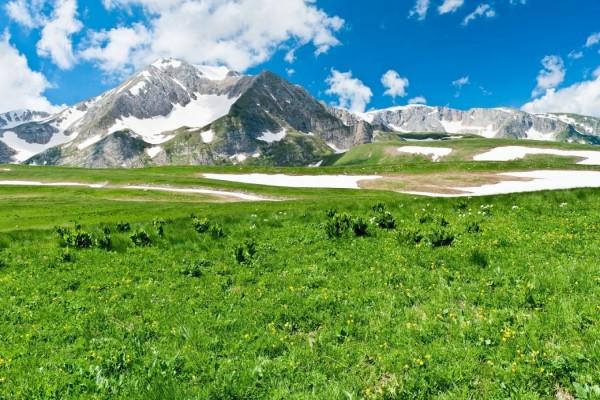 Hierbas verdes cerca de las montañas