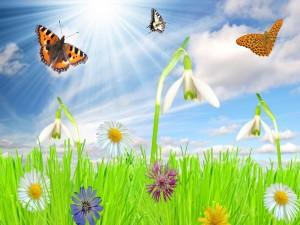 Postal: Mariposas volando sobre las flores