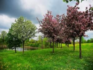Árboles florecidos