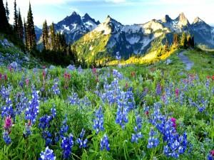 Hierbas, flores y montañas en primavera