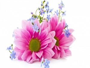 Postal: Flores con pétalos rosados