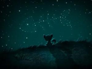 Gatito admirando un cielo estrellado