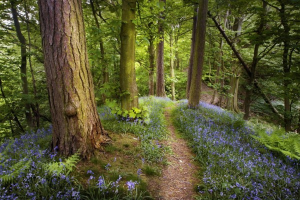 Caminando por un bonito bosque