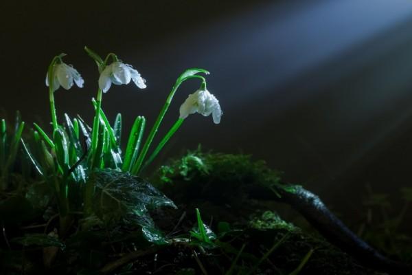 Flores blancas entre la hierba verde