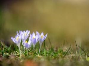 Postal: Hermosas flores blancas con un toque de color lila