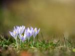 Hermosas flores blancas con un toque de color lila