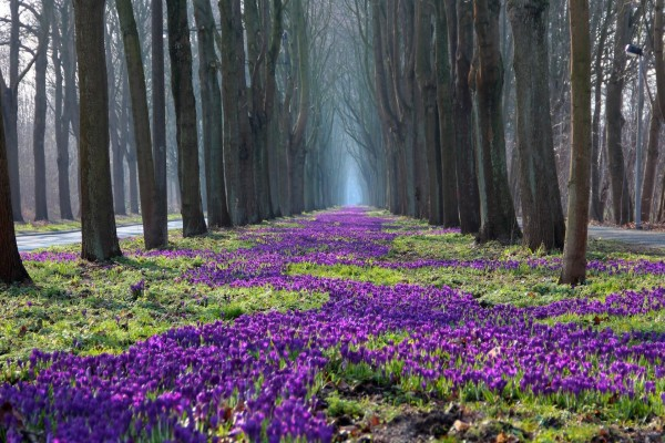 Flores entre hileras de árboles