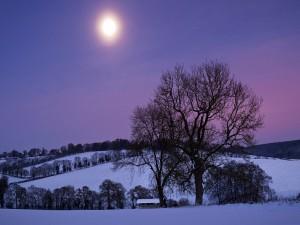 Postal: El brillo de la luna en un paisaje nevado