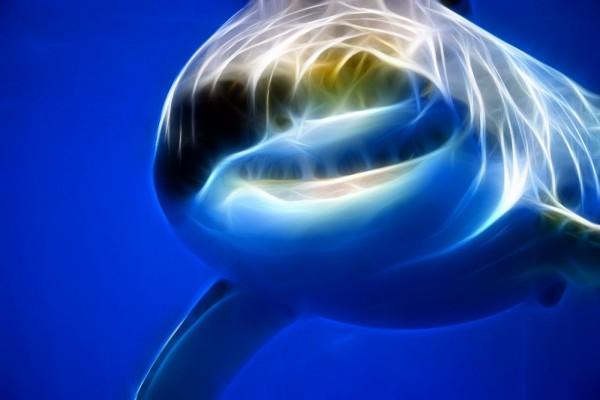 Tiburón luminoso