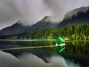 Caseta verde flotando en el lago