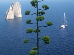 Roca, árbol y velero en el mar
