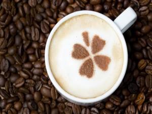 Trébol en el café