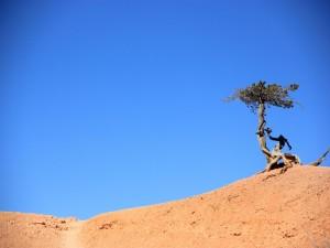 Árbol en un terreno seco