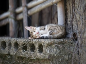 Gatito dormido en la calle