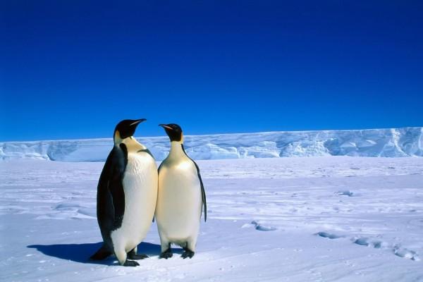 Dos pingüinos juntos en el hielo