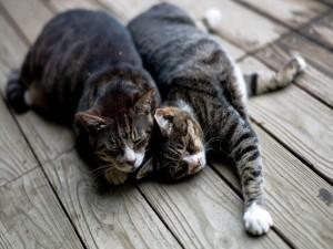 Postal: Gatos dormidos dándose calor