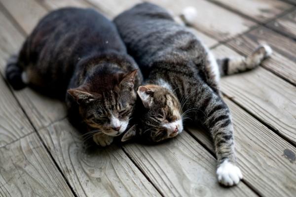 Gatos dormidos dándose calor