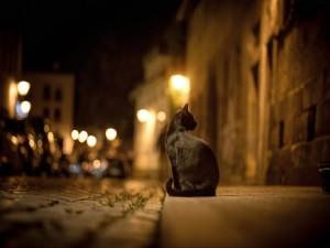 Postal: Gato en la noche