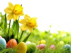 Un prado con narcisos y huevos de Pascua
