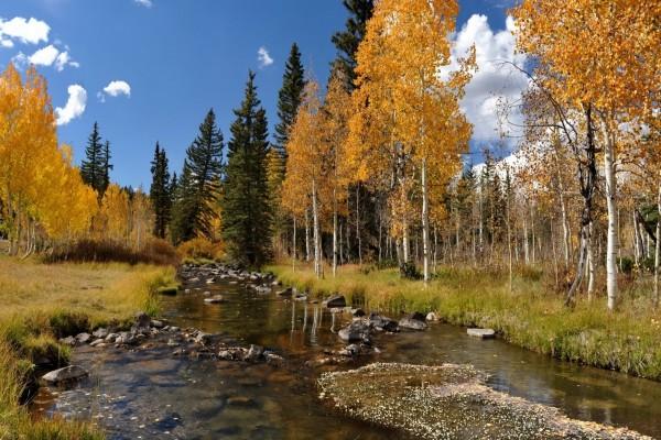 Río tranquilo entre árboles