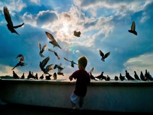 Un niño dando de comer a las palomas