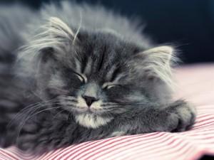 Postal: Gato durmiendo plácidamente