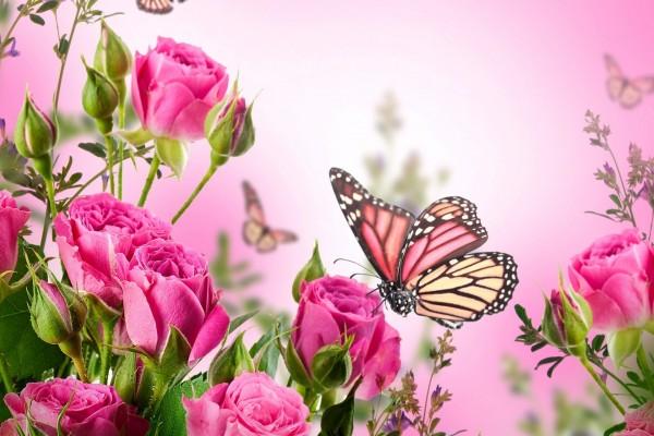 Coloridas mariposas entre las flores