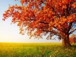 Árbol en otoño en una verde pradera