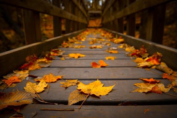 Hojas sobre el puente de madera