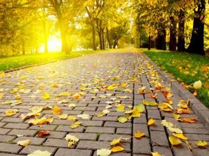 Las primeras hojas de otoño, en el suelo del parque
