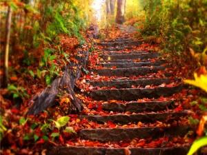 Hojas sobre las escaleras, en plena naturaleza