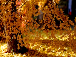 Árbol con bonitas hojas anaranjadas