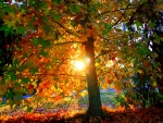 Árbol recibiendo la luz del sol
