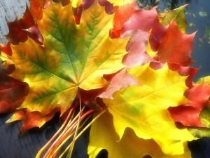 Postal: Ramillete de hojas otoñales
