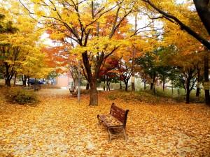 Postal: Otoño en el parque