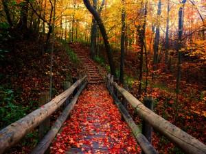 Pasarela de madera en el bosque