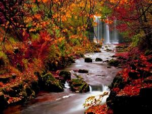 Postal: Río y cascada con los colores del otoño