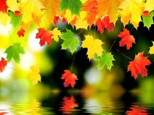 Hojas de colores junto al agua