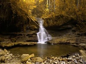 Árbol caído sobre la cascada